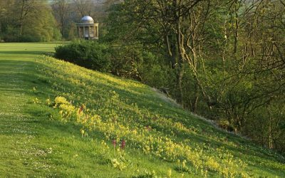 Experience Camping at Rievaulx Terrace For The First Time