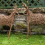 Willow Weaving Workshop: Deer