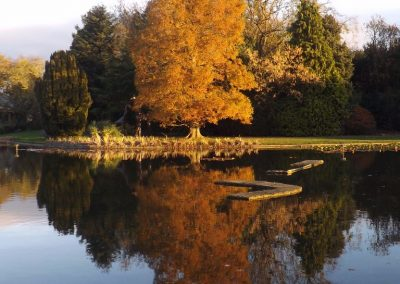 Burnby Hall Gardens - Photograph by Peter Rogers (19)