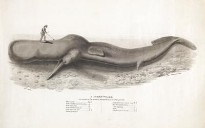 Reviving a Leviathan at Burton Constable