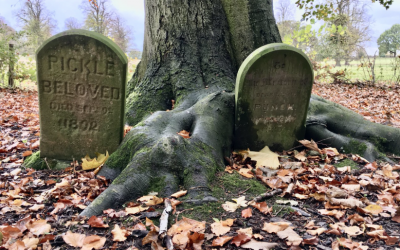 The Crowe's Wood Halloween Trail