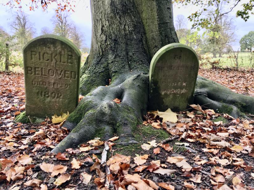 The Crowe's Wood Halloween Trail